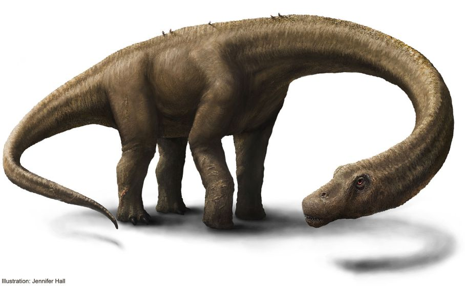 """Artist Rendering 2 - Hall - Dreadnoughtus reconstruction"". Via Wikipedia."